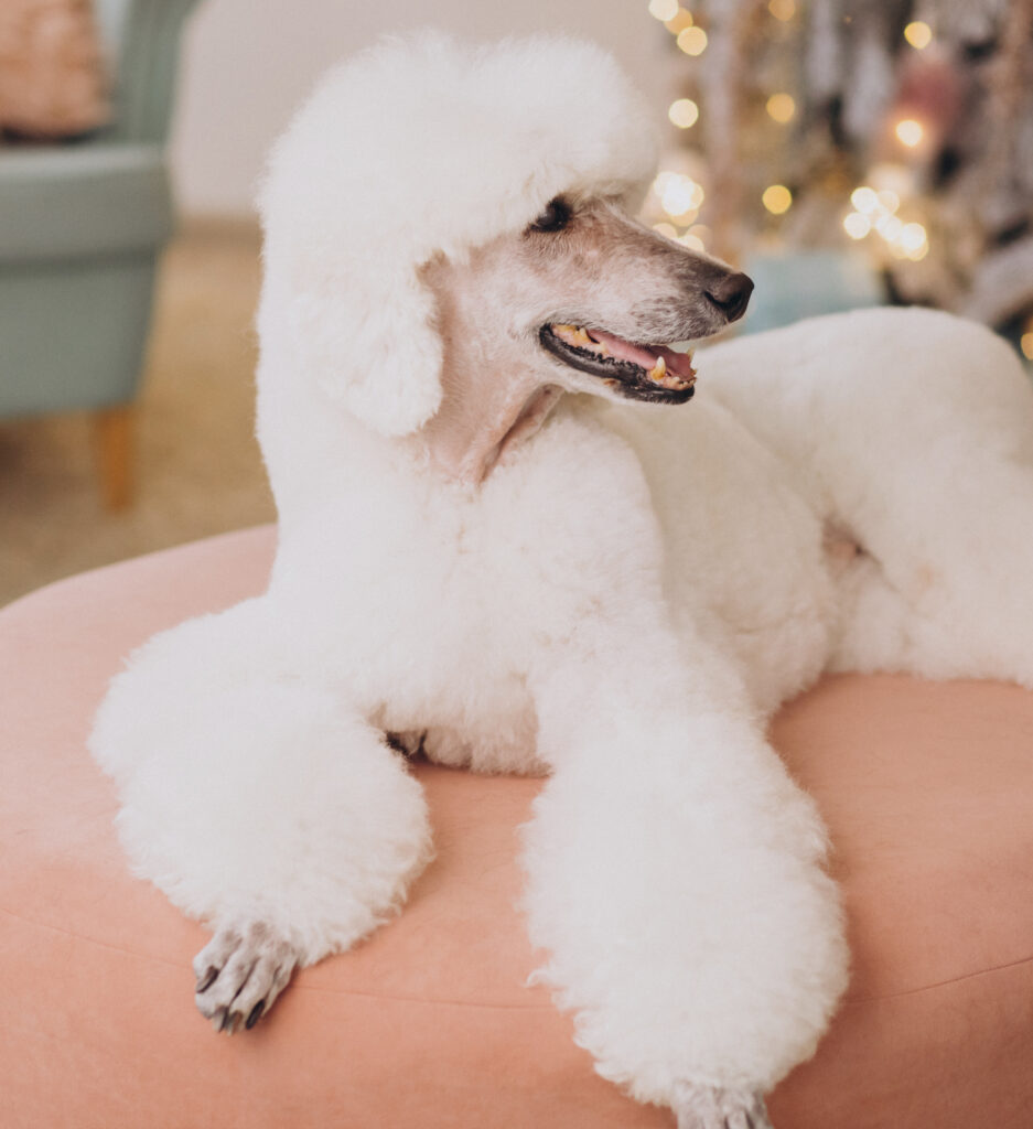 04-veterinaria-mijas-cuidados-del-pelo